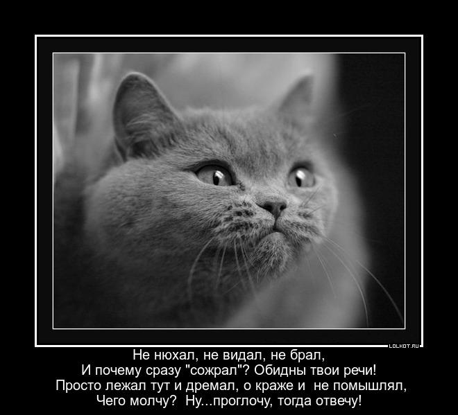 Молчание котят