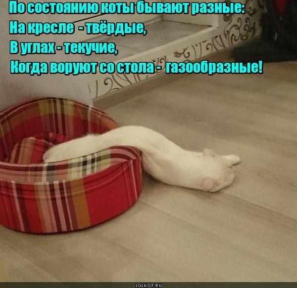 Кошачья термодинамика