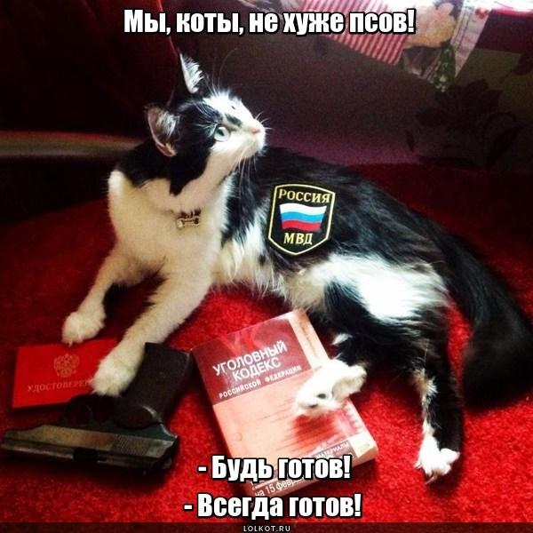 Будь котов!