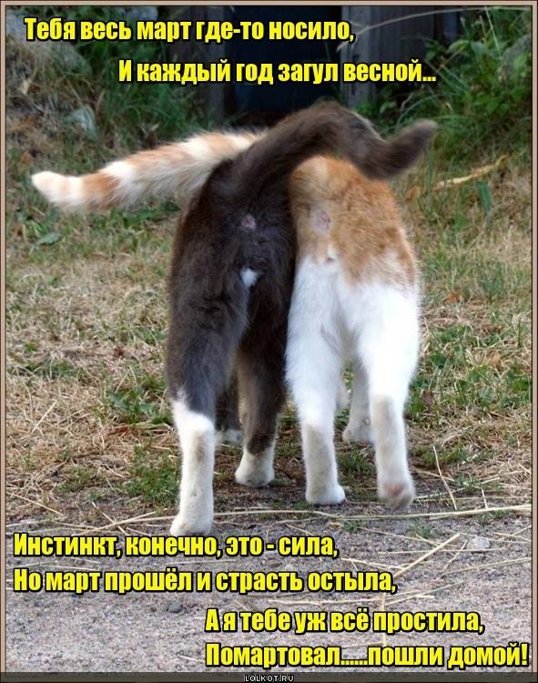 Мартоворот котов в природе