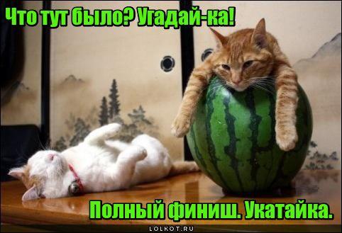 """Веселье """"Укатайка"""""""