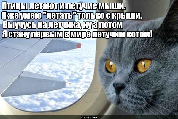 Эскадрон котов летучих