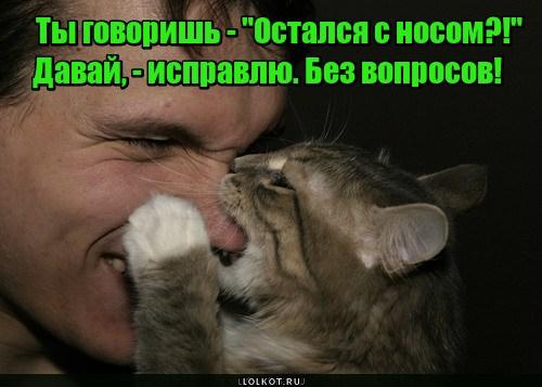 Ринопластика по-кошачьи