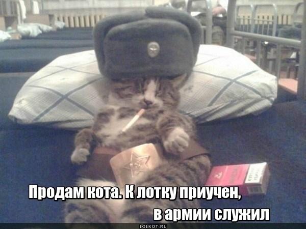 Служивый кот