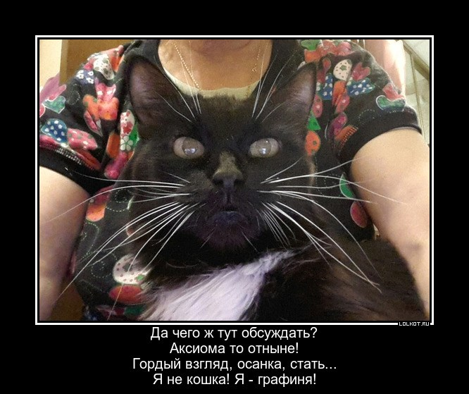 Кошачья графиня