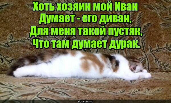 Ленивый диванный боец