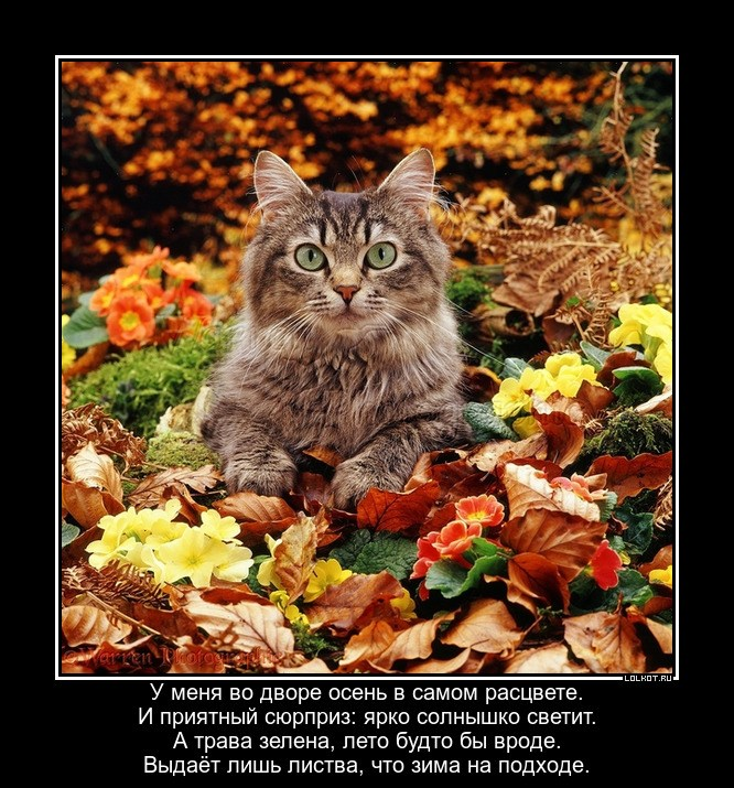 Осенний поэт