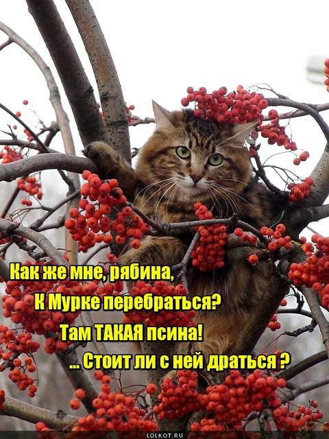 Помогай-дерево