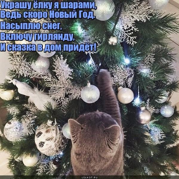 Новогодняя подкотовка