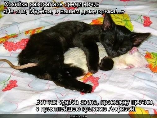 Крысолюбка