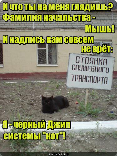 Служебный котомобиль