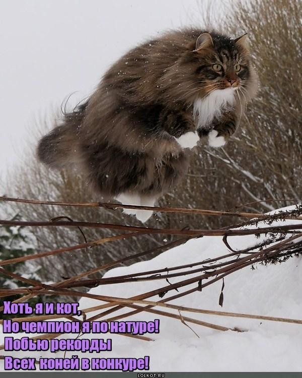 Конкурный кот