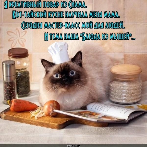 Кот-тайский повар