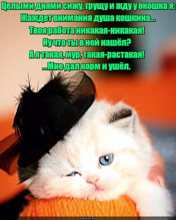 Мадам Полуброшкина