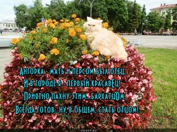 Бархатистая готовность № 1
