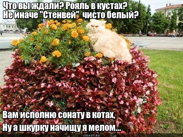 Рояльный кот
