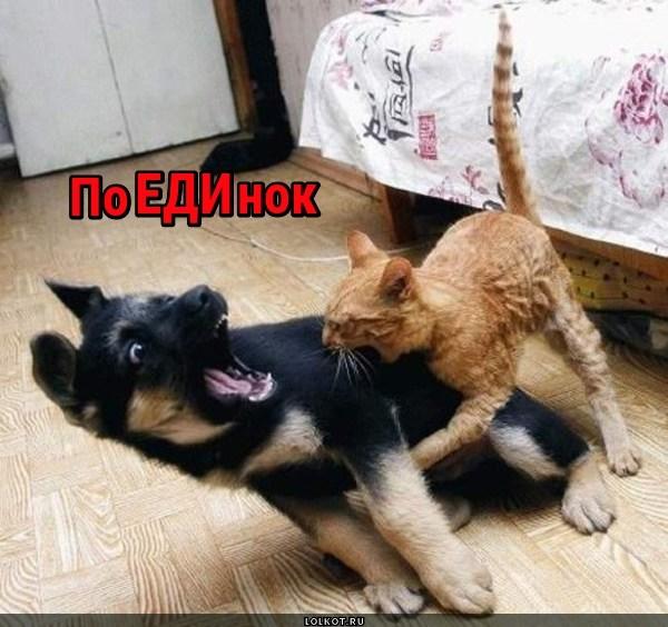 Единокие бойцы