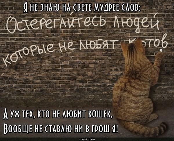 Кошачье предостережение