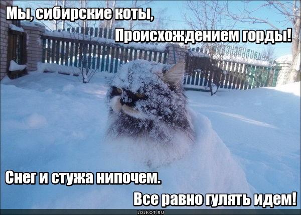 Снежное происхождение