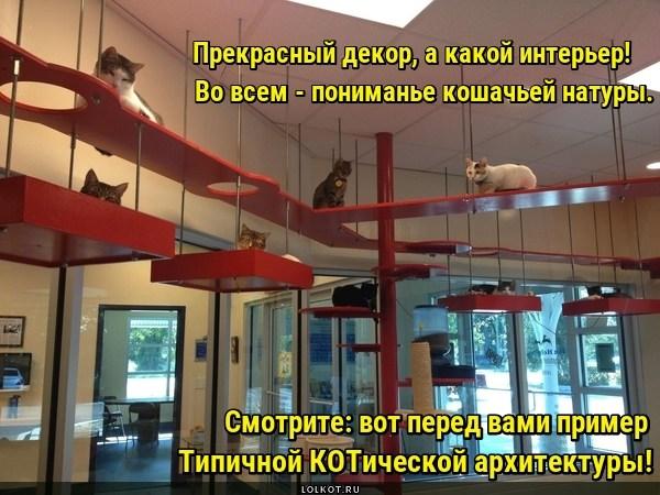 Архитектурная КОТика