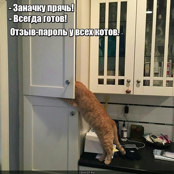 Кошачья солидарная