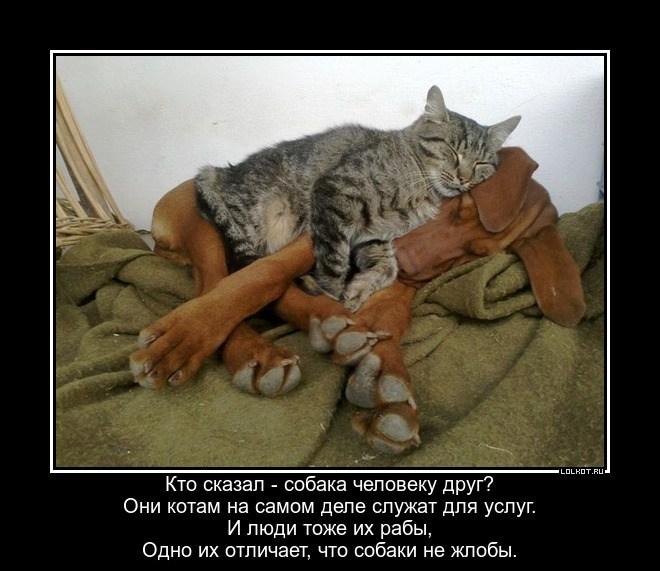 Котовладельческий строй