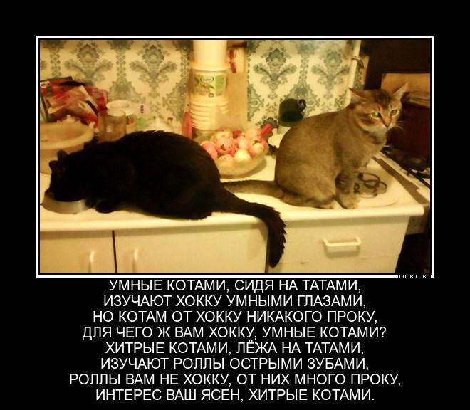 Хитроумные котами