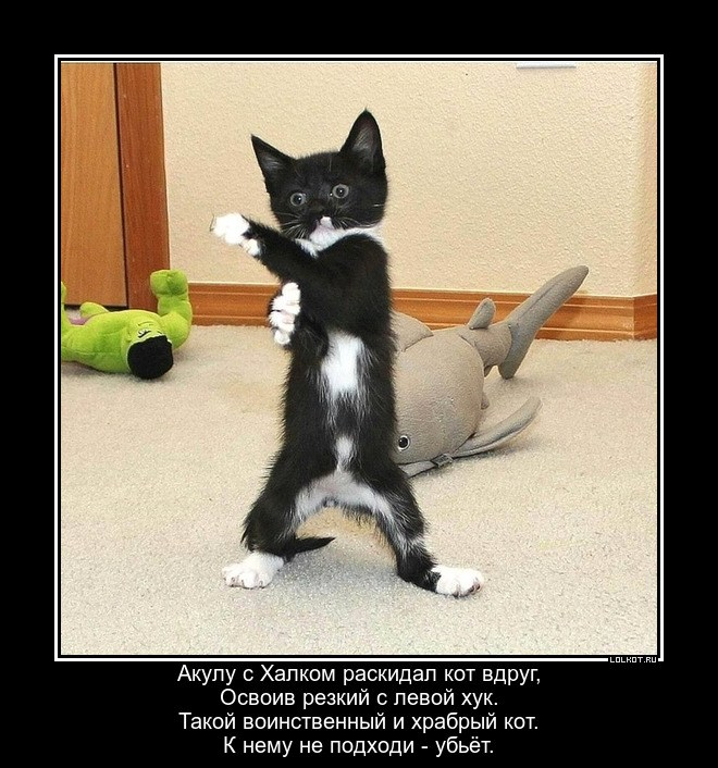 Воинственный котишка