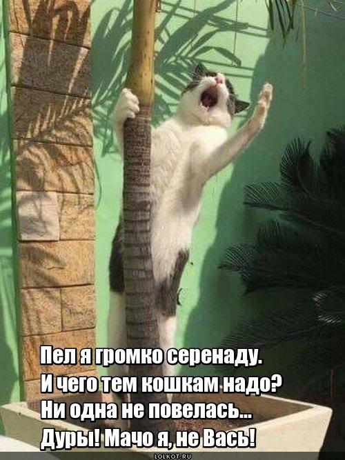 Мачовась