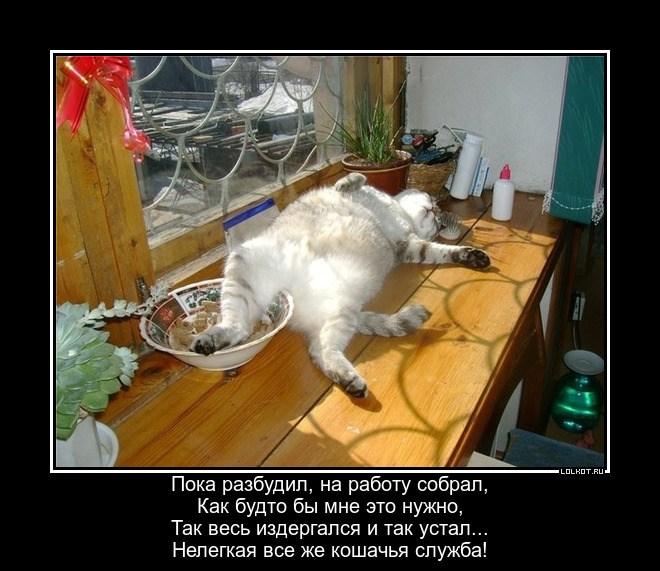 Кошачья служба