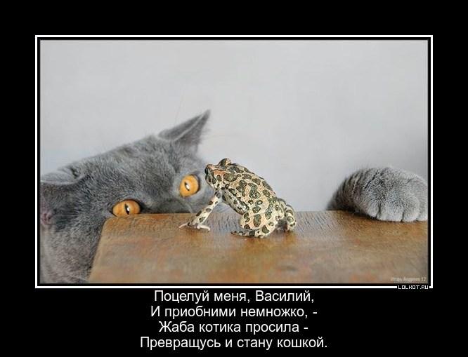 Котевна-лягушка