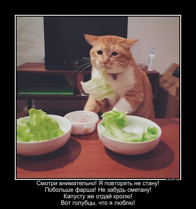 Рецепт от кота