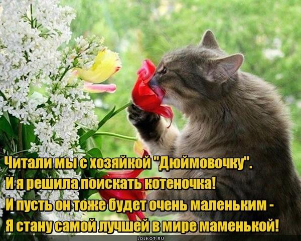 Сказочный котенок