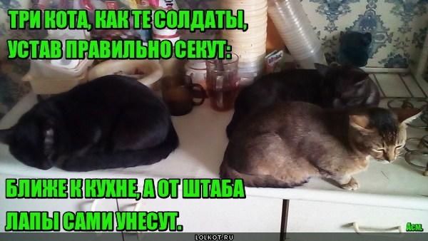 Уставные коты