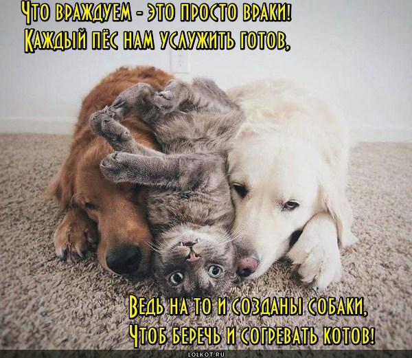 Собаковое предназначение