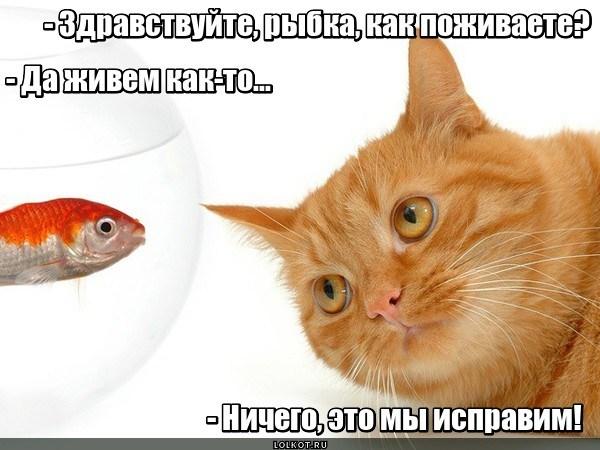 Кошачий апгрейд