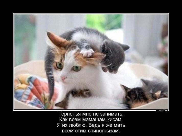 Кошачья терпеливая