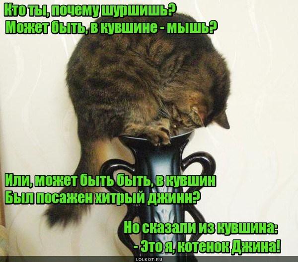 Котенок джинна
