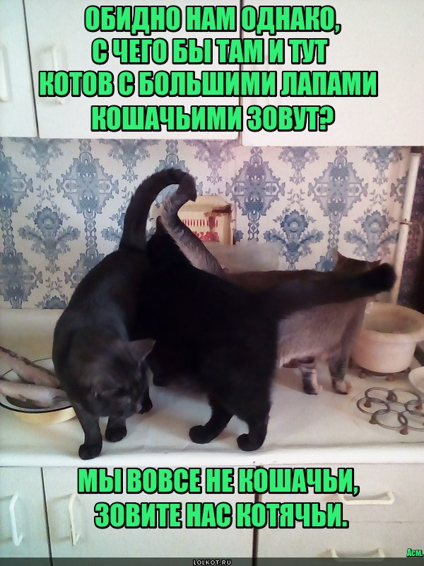 Котячьи позывные
