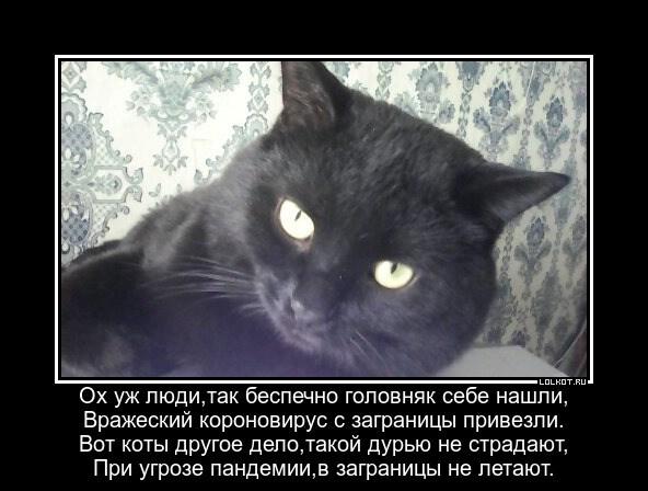 Невыездные коты