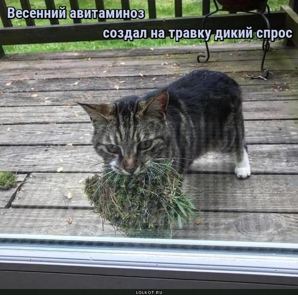 Травяной спрос