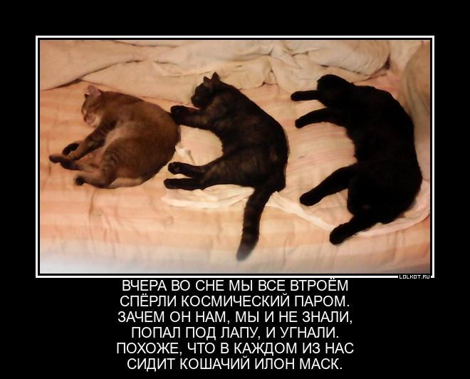 Кошачья авантюра
