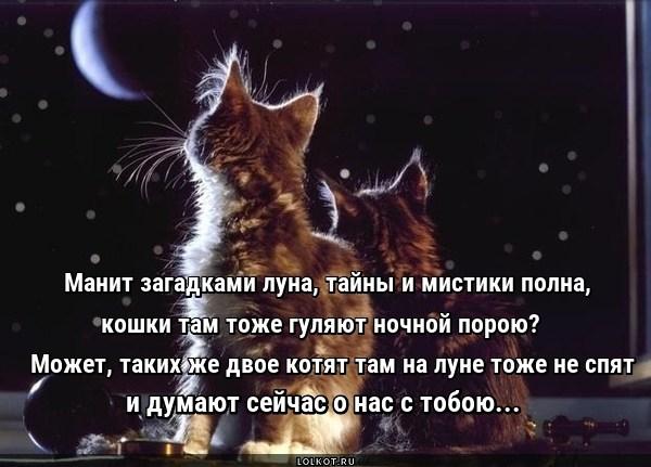 Лунные котята