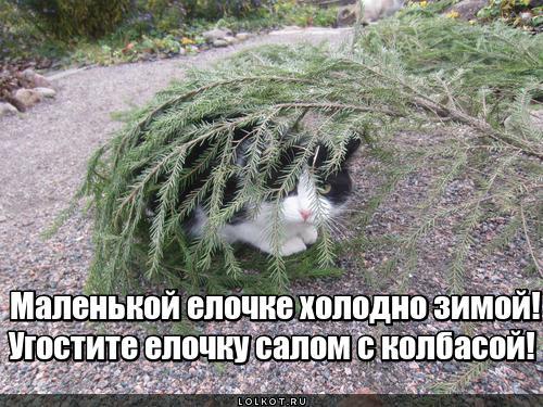 Голоднюсенькая елочка