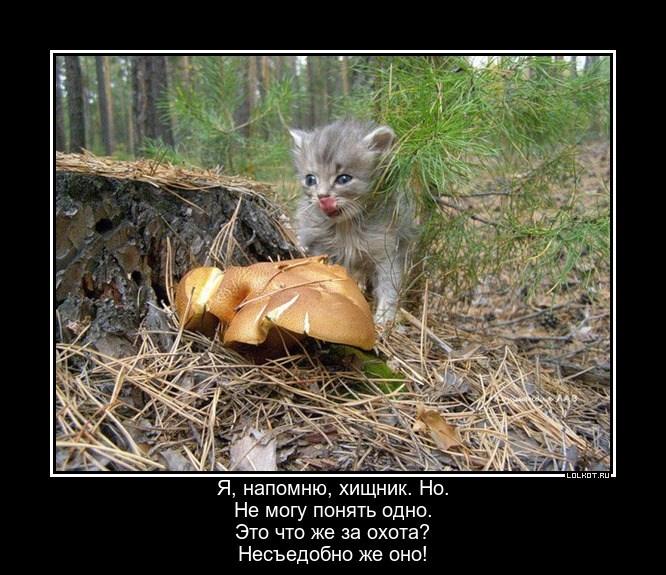 Озадаченный хищник