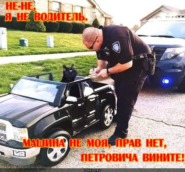 Кот Петровича