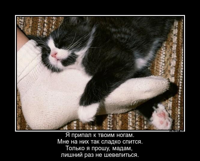 Ножки для кошки