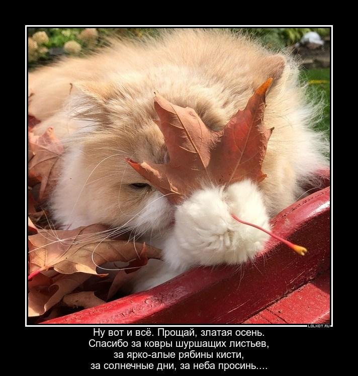 Осенняя благодарная