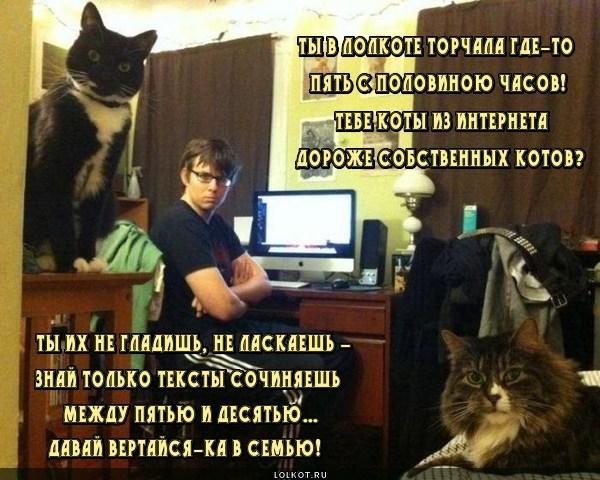 Котячий ультиматум