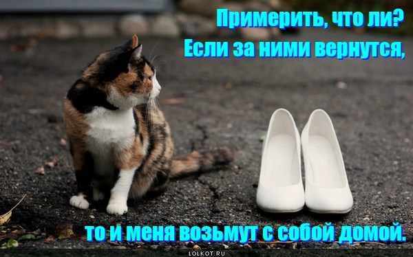 Котейка в туфЕльках